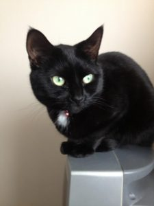 Geri - a cat for rehoming