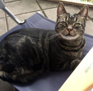 Tabby - a cat for rehoming