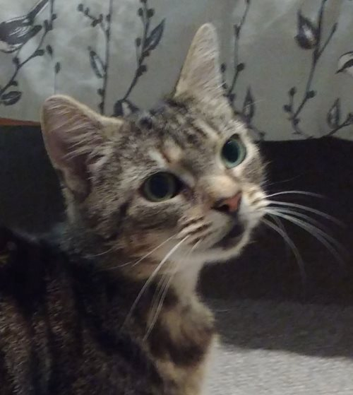 Milly, a cat looking for a new home