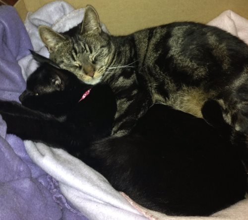 Tabby and Geri - cats for rehoming