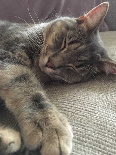 Max - a missing cat