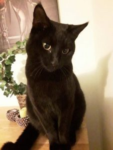 Bucky - a missing cat