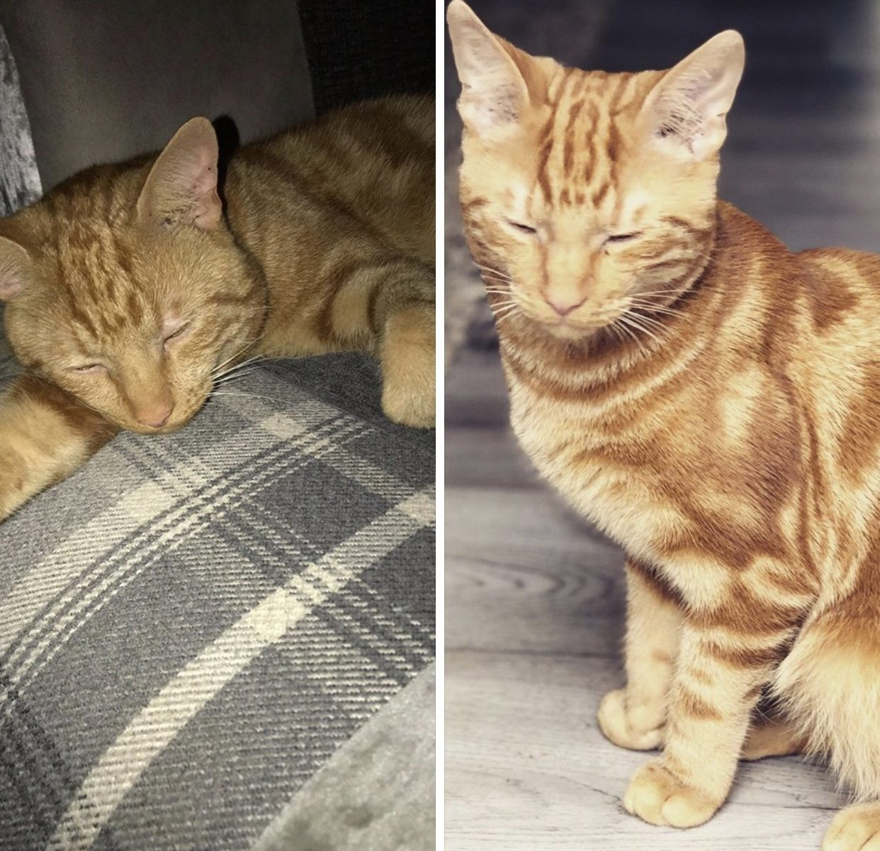 Cooper - a lost cat