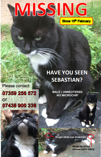 Sebastian - a missing cat